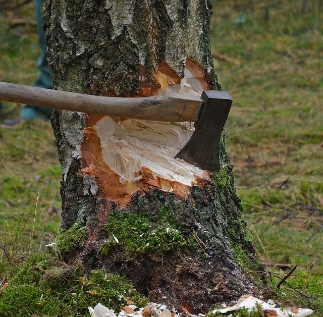 Sekira zabijena u drvo